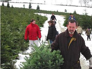 Weihnachtsbaume im sauerland selber schlagen